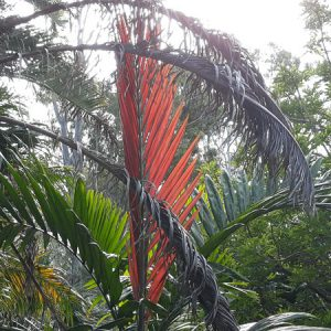 Flame thrower Palm-web